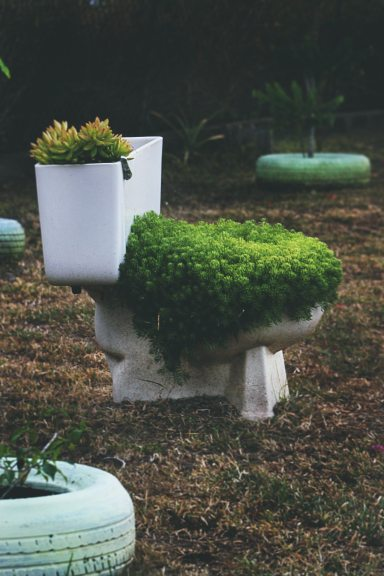 green-leafed-plants-on-toilet-bowl-1682346